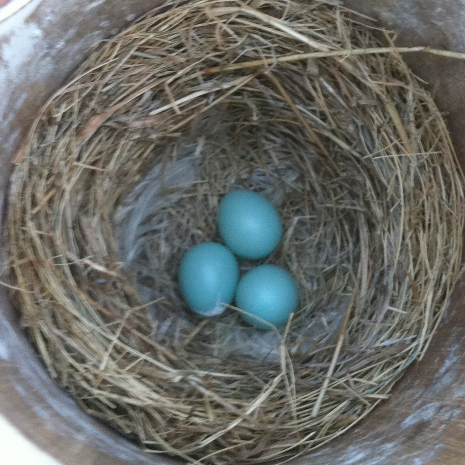 how to keep sparrows from nesting on your house