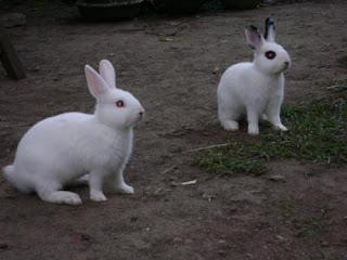 Gambar Anak Kelinci