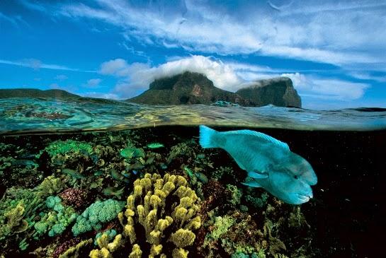 Howe Island Isla de Lord Howe