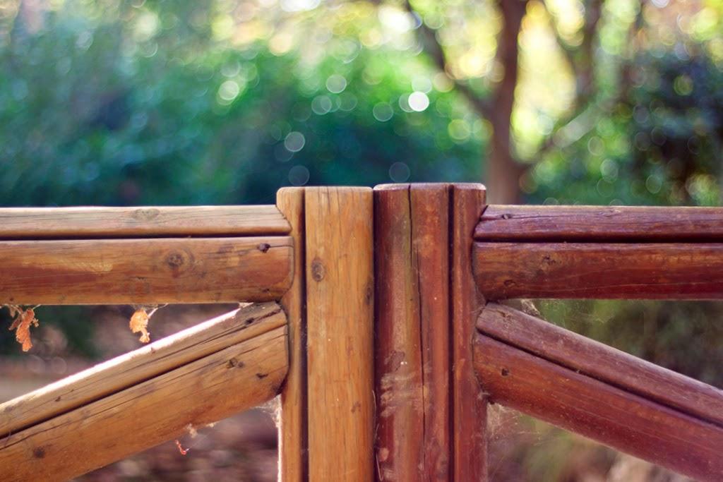 fotografía naturaleza otoño El Retiro Madrid