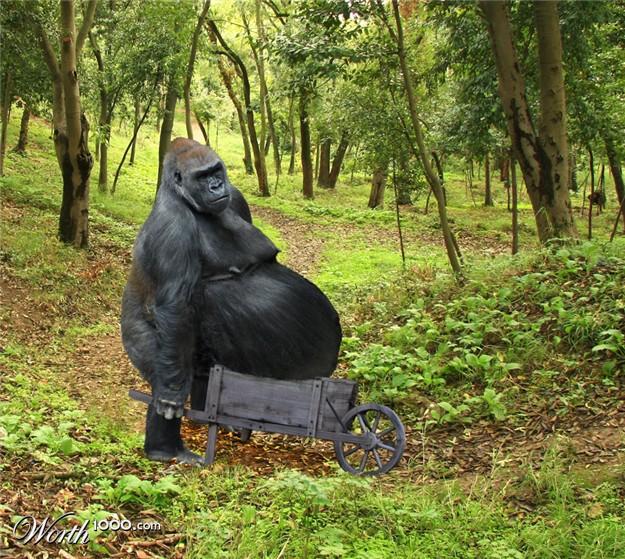 imagenes de animales gordos - imagenes de animales gordos graciosas con mucho calor