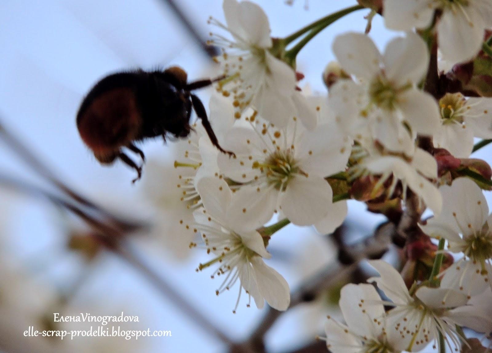 Елена Vinogradova. пчела