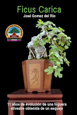 Todo bonsai ficus carica higuera silvestre libro - Libros sobre bonsai ...