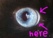 Goma moon eye 03