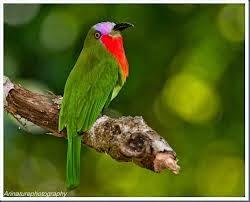 Burung APA?