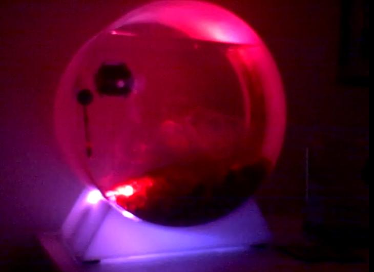 moon jellyfish tank