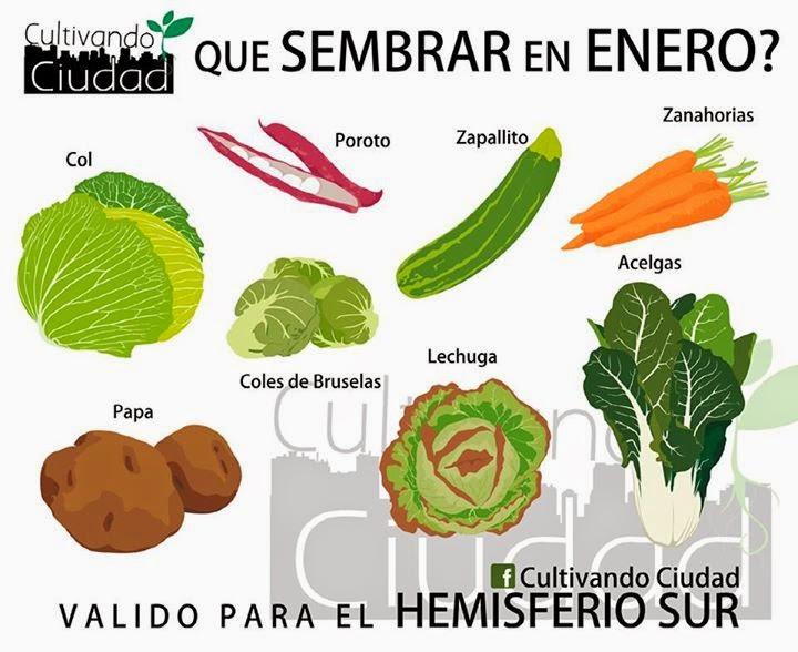 Huerta de ciudad enero for Alelopatia en hortalizas