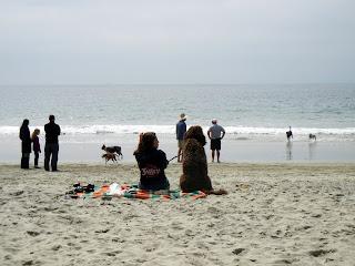 Coronado Beach dog beach
