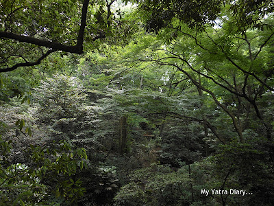 The forested area at the Meiji Jingu Shrine, Tokyo