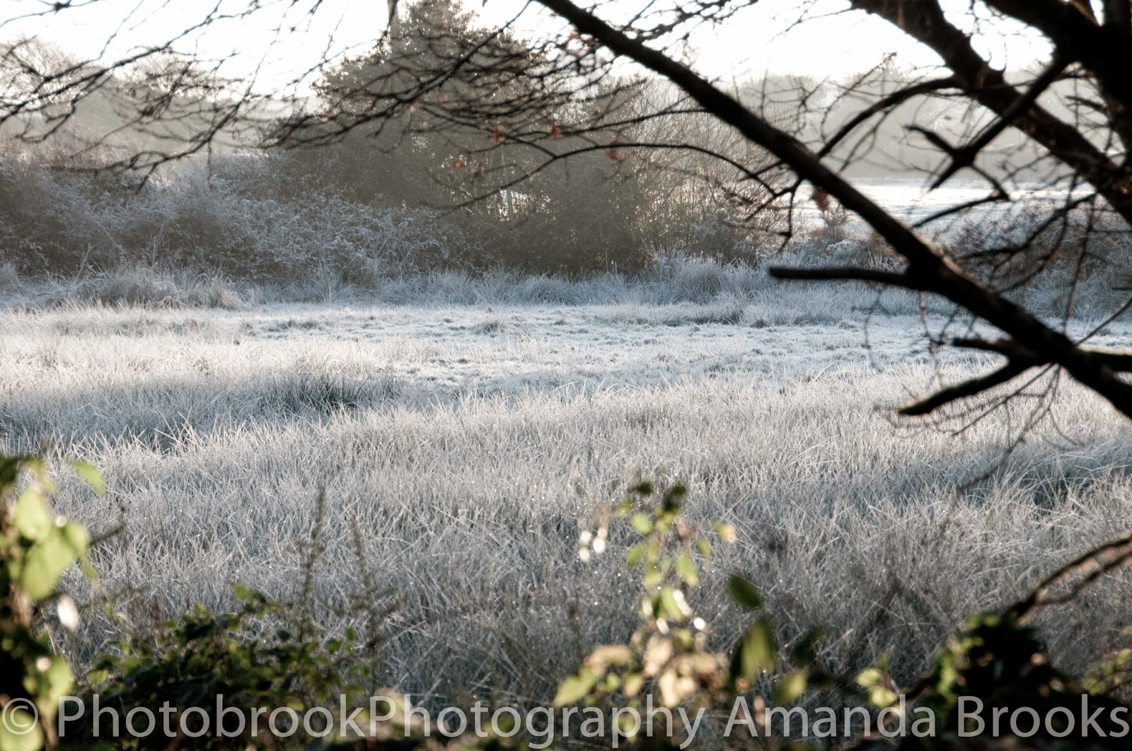 Heavy Frost in Cornwall