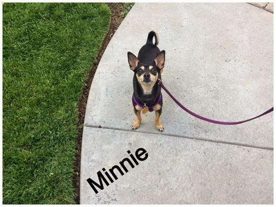 Minnie - pet dog building confidence
