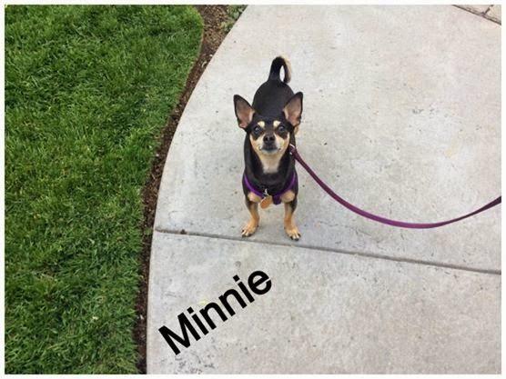 Minnie - pet dog building confidence