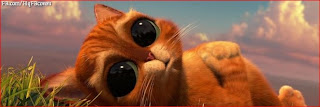 funny cat dog facebook covers