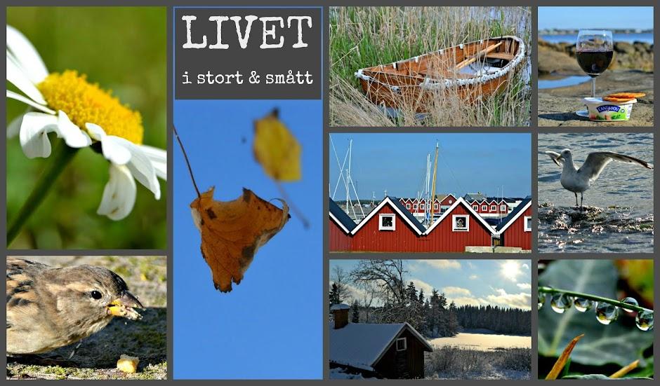 Livet i stort & smått