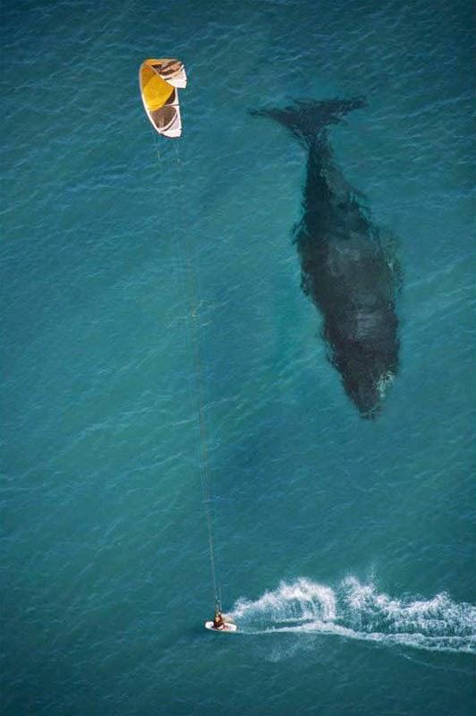 ballena debajo del agua
