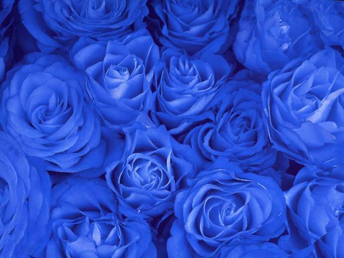 Hoa hồng xanh