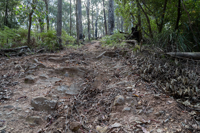 steep track wombat state forest