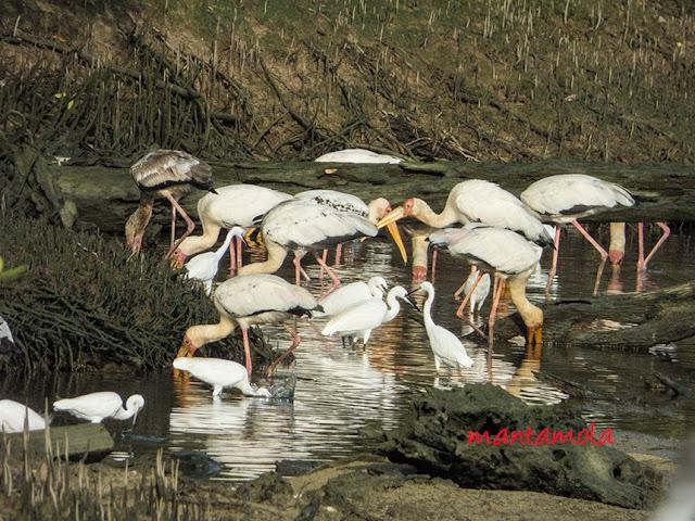 Storks, Egrets
