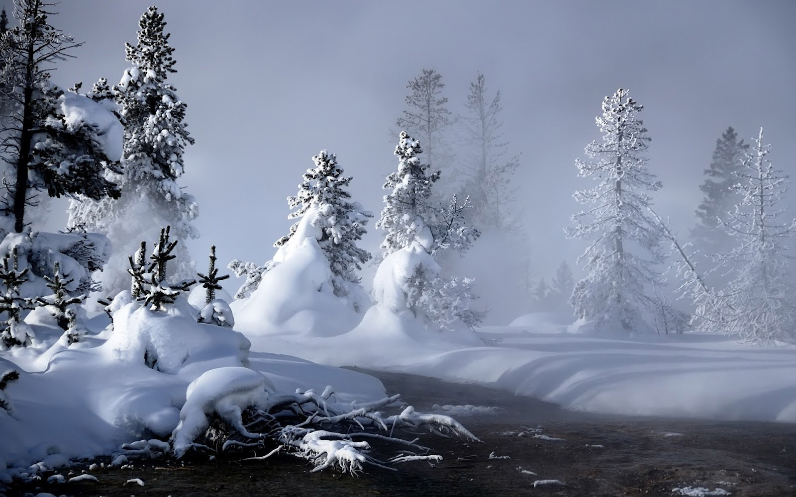 http://1.bp.blogspot.com/-tcGEvyw8i5E/Tz5Pc1_AEoI/AAAAAAAADJE/onfOwdplv4Y/s1600/winter_fog_hd_widescreen_wallpapers_1920x1200.jpeg
