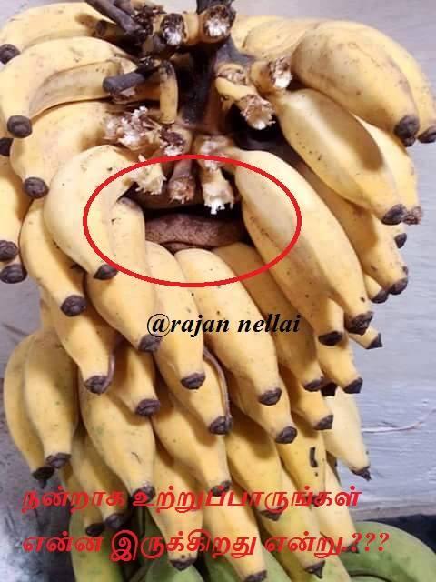 Vazhai Thaaril Pazham edukkum pozhudhu kavanamaaga edukkavum. Nandraaga uttru paarungal vaazhai tharukkul enna irukkiradhu endru. awareness post in tamil, snake in banana, rare pics in tamil, funny pics in tamil, Tamil facebook post, விழிப்புணர்வு, vizhippunarvu, safety tips in tamil