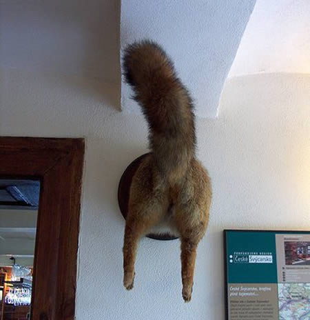 taxidermiafea11.jpg