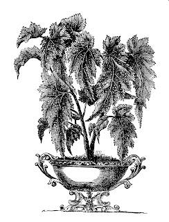 stock plant image