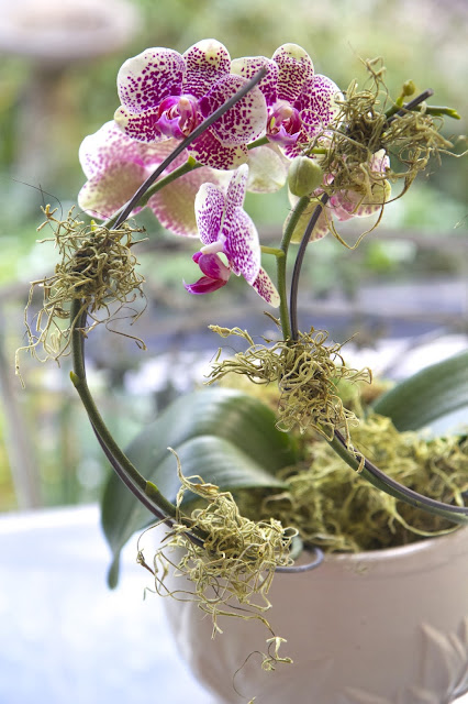 Mask orchid clips with moss; How to Landscape an Orchid; Nora's Nest