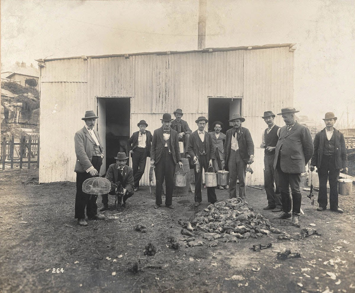 In this photograph features a group of men are shown standing behind a pile of rats. One of them is holding a cage and many others are holding bucket-like utilities. These rat catchers were supposedly disinfecting Sydney in 1900 of rats to prevent the spread of the bubonic plague in the city. This photograph was taken by Mr. John Degotardi, Jr., photographer from the Department of Public Works.
