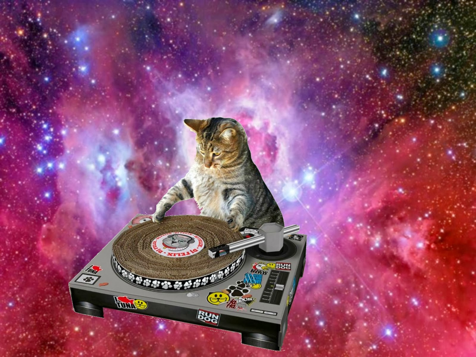 caterville cats in space