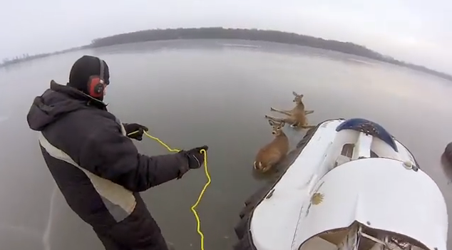 hovercraft deer rescue in Minnesota