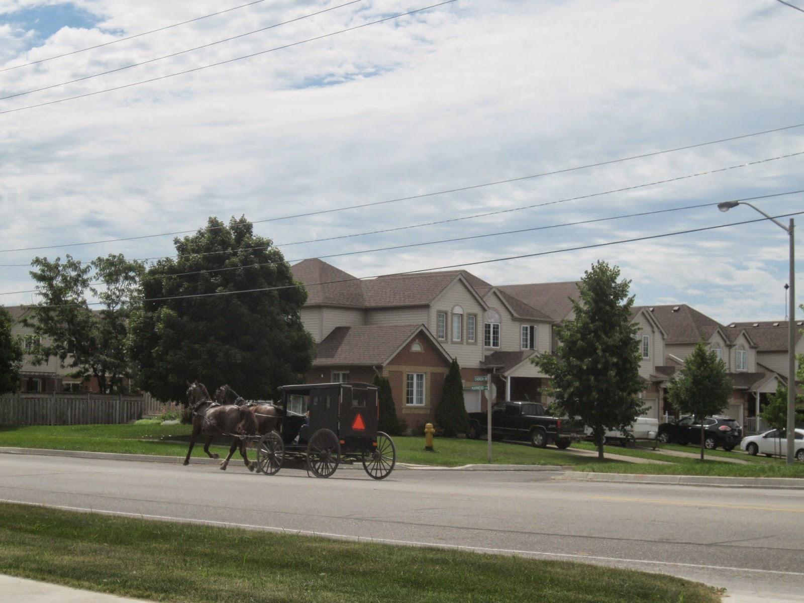 My Crazy Life: Mennonite