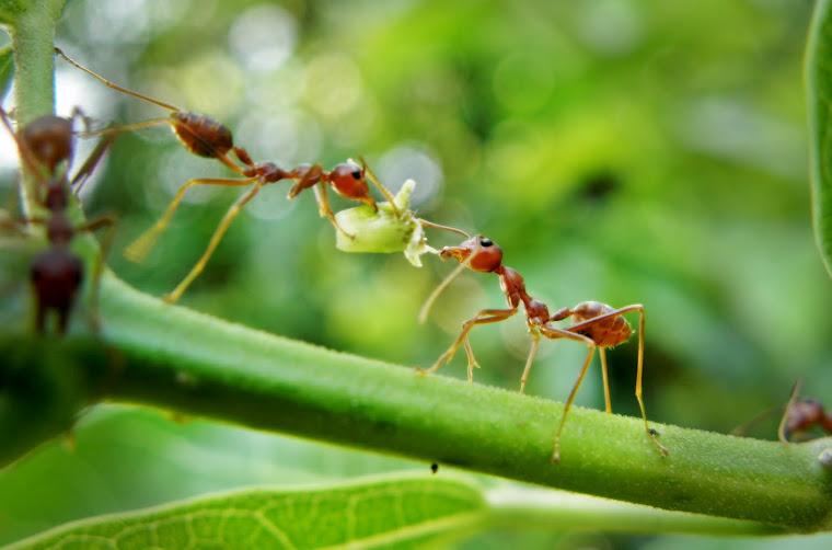 semut-semut yang prihatin