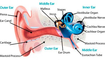 Health guide ear pain after the flight you might notice when you open your mouthyawn chew or blow your nose then feel pop in the ears ccuart Image collections