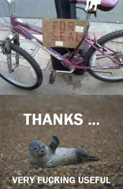 seal, sale, bike