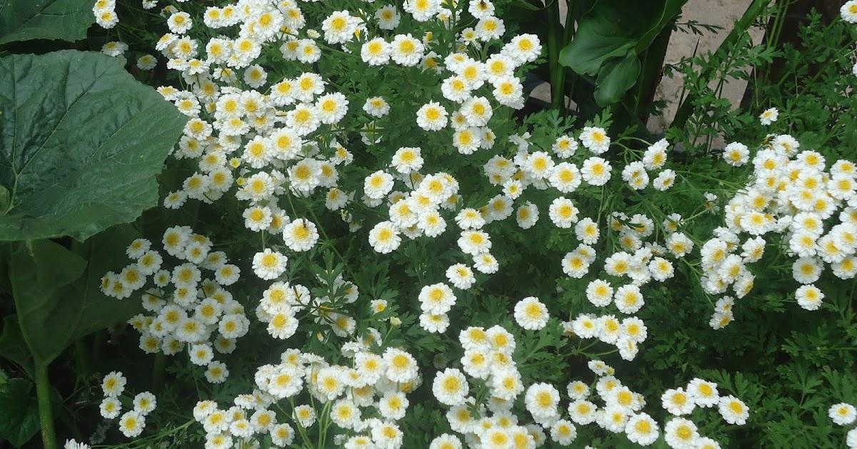 minha Horta Biológica E mais algumas Flores lá do Jardim da Celeste