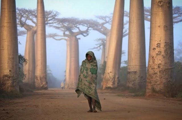 chica entre árboles baobad
