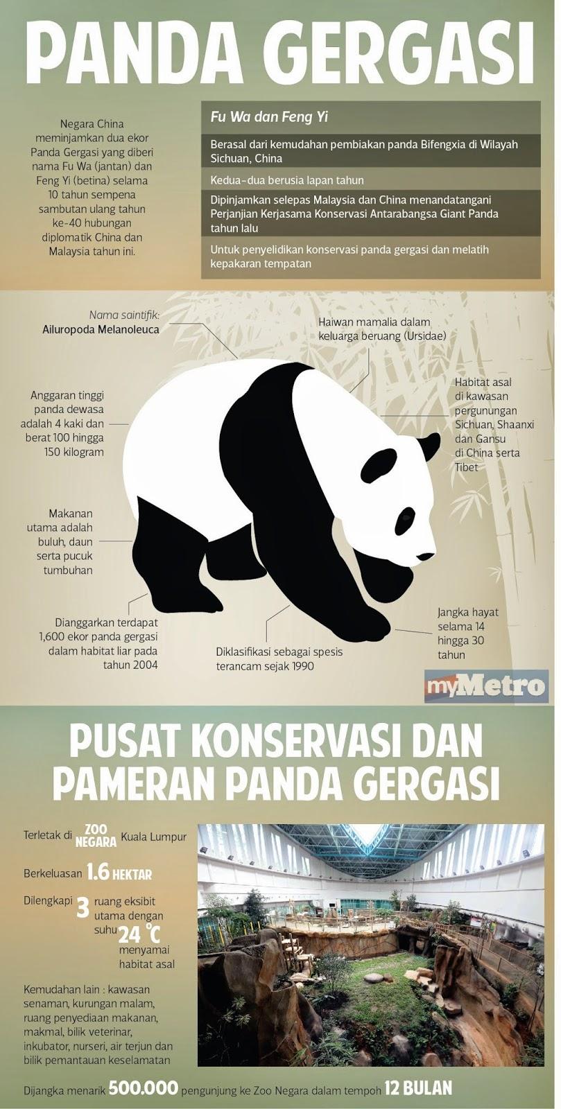 panda gergasi dari china