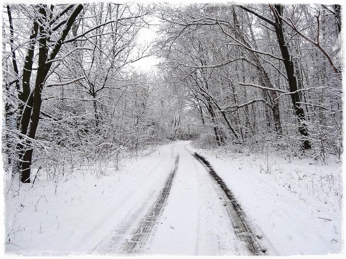 Las na Olszynce Grochowskiej
