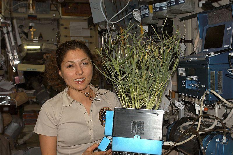 Plantas de interior no espaço - NASA