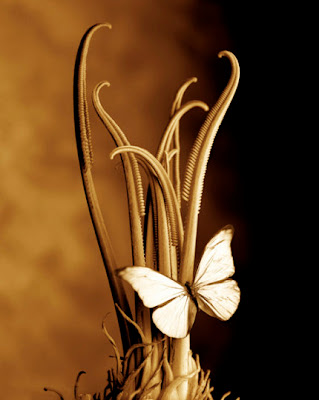 amazing_wallpapers_butterfly