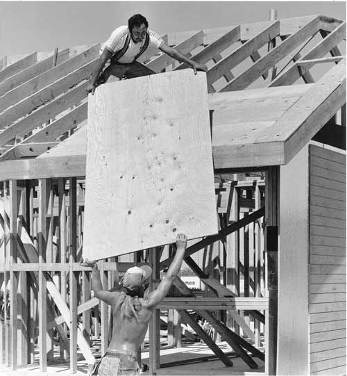 Plywood is made of veneers selected to give the optimum combination of economy and performance for each application. This sheet of roof sheathing plywood is faced with a D veneer on the underside and a C veneer on the top side. These veneers, though unattractive, perform well structurally and are much less costly than the higher grades incorporated into plywood made for uses where appearance is important.
