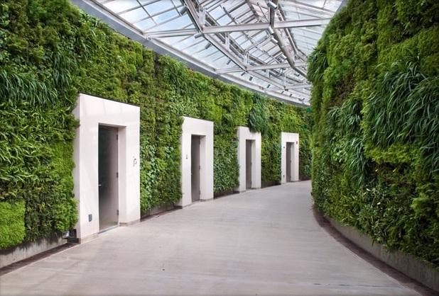 paredes verdes muros vivos