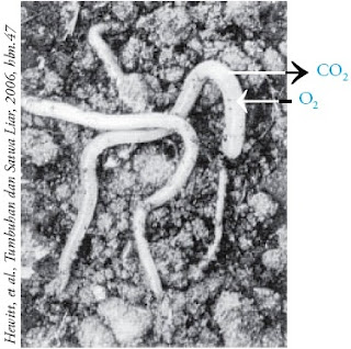 Pertukaran gas pada permukaan tubuh cacing