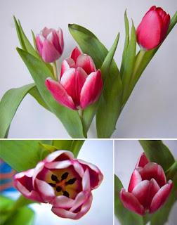 Фото клипарт фото цветы тюльпаны
