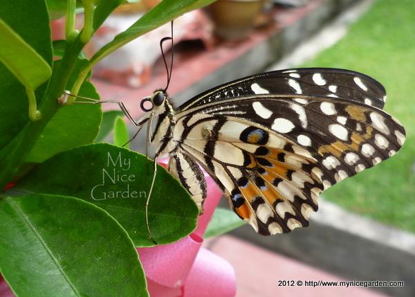 My Nice Garden: Rearin...
