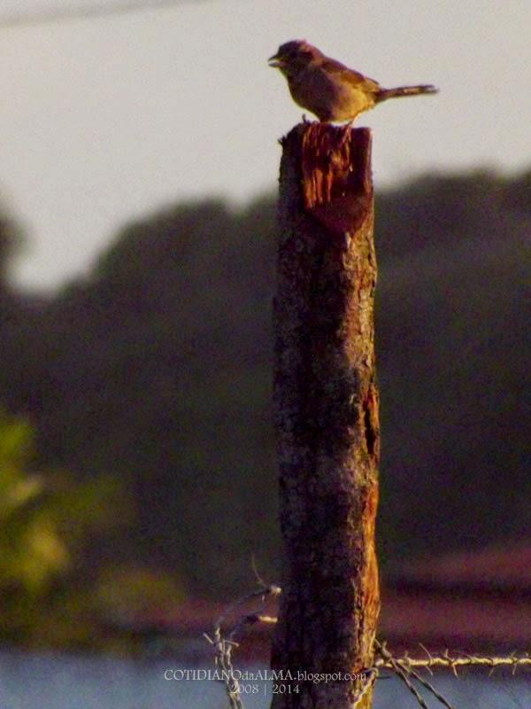 Ezequiel Rodrigues Cotidiano da Alma Sol Verão Pássaro Passarinho Pardal