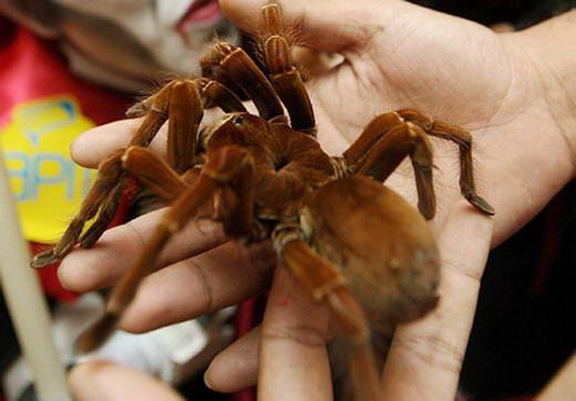 15 Serangga Terbesar di Dunia