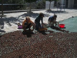 3 Σεμινάρια-πρακτικά εργαστήρια φυσικής καλλιέργειας  τον Αύγουστο με το Παναγιώτη Μανίκη