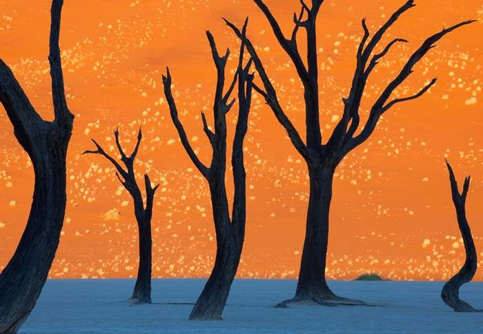 "Photographer Frans Lanting. ""The picture was taken at dawn when the warm light of the morning sun lit up the huge sand dune dotted with white grass, and white clay bottom land still remained in the shadows."