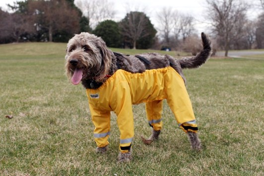 proxy - How does a dog wear pants? - Jokes and Humor